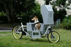 Cargobike #eHarry aus dem Hause Pedalpower mit Transportbox 'giglio ragazzi dog' - angetrieben mit dem Brose Mittelmotor Drive-S (90 NM), hier in Sonderfarbe 'shiny white' und schwefelgelben Felgen. #pedalpower #cargobike